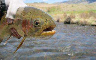 Fly Fishing Tours Colorado