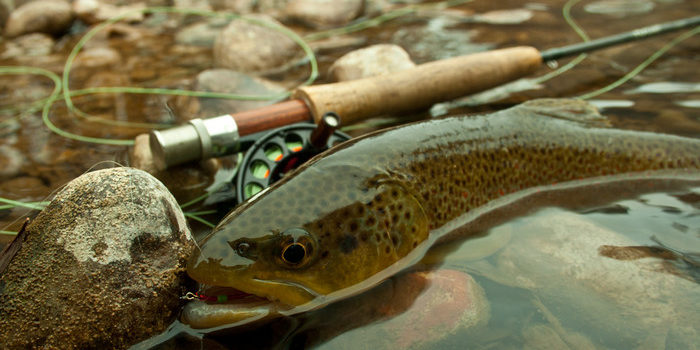 Fishing Report for Colorado