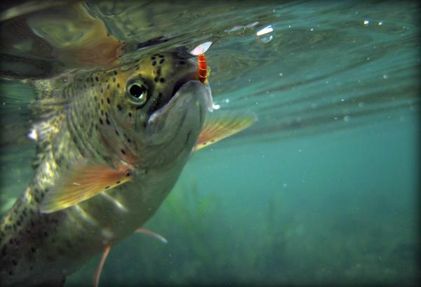 Fishing Spots in Colorado Springs